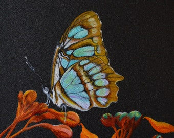 SOLD IN EXHIBITION -Malachite Butterfly - Papillon Malachite - Siproeta stelenes - Oil painting on wood