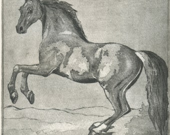 "engraving ""Horse"" /etching Horse/printmaking Horse/Horse/print/beautiful horse."