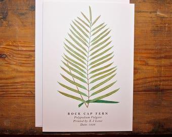 Rock Cap Fern: Greeting Card