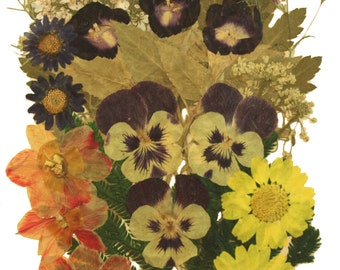 Pressed flowers mix, pansy, morning glory, daffodils, daisy, alyssum, foliage