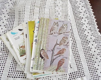 Birds, Vintage Book Pages, Ephemera, Scrapbook, Collage, Mixed Media, Crafting, Antique Paper, Aged Paper, Decoupage, Journal, Card Making
