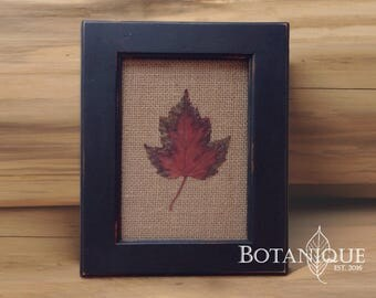 Red Sugar Maple with burlap background in black frame