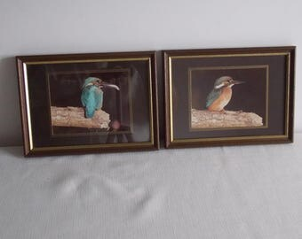 A pair of framed King Fishers.