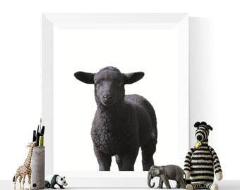 Black Sheep Art | Animal Printable | Nursery Decor | Black Sheep Photograph Printable | Farmyard Animals | Farm Animal Prints