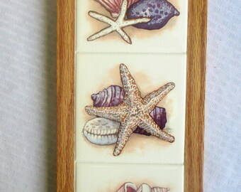 Marvelous Sea Shells, Wall Art, Wall Decor, Bathroom Decor, Shower, Backsplash,