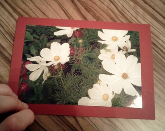White flowers spring postcard