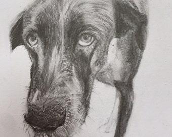 Custom pet sketch