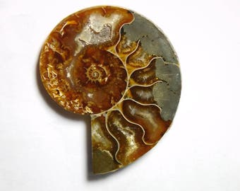 Natural Ammonite Cabochons Top Quality Ammonite Gemstone Front Polished Ammonite Loose Stone 85cts.(48X46)mm