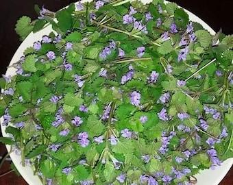 Ground Ivy, Dry Herb