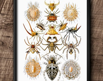 Arachnids · Instant Download · Wall · Printable · Digital File #115
