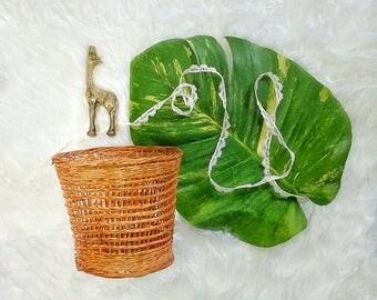 Wicker Basket / Plant Basket