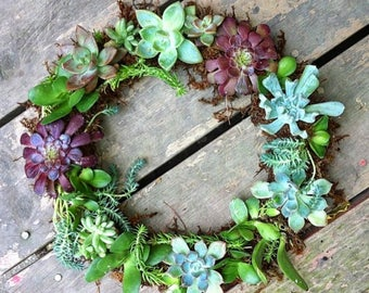 "12"" Full Living Succulent Wreath"