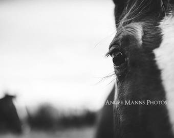 Horse Photograph, Farm Animal Photography, Rustic Home Decor