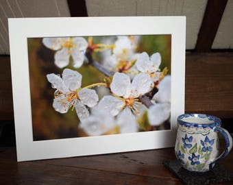 "A mounted 12""x 8"" photo of blossom after a shower together with an A6 card/notelet with a small photograph by Jack By The Hedge."