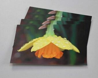 One A6 yellow Daffodil with rain drops postcard (matte)