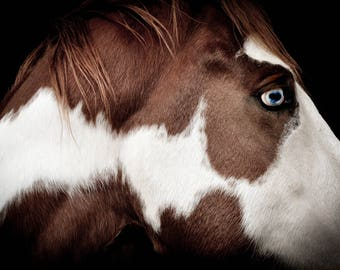 Blue eyed paint horse