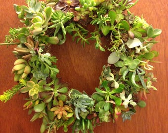 Living Succulent Wreath: 12 inches, fully filled