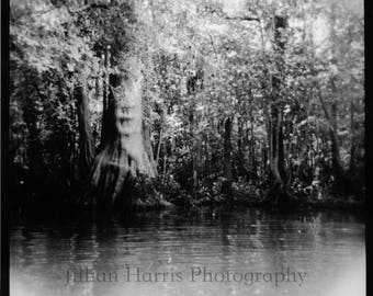 "Black and White Silver Gelatin Print - ""Bayou"""