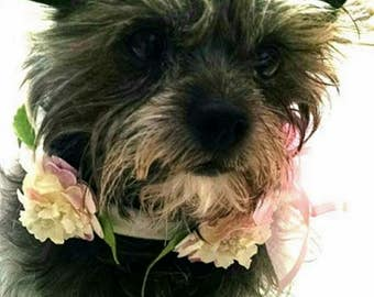 Flower Collar for that wedding or May Flower event For your Yorkie Chihuahua Maltese poodle or large pup