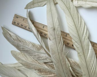 COQUE Tail Feathers,  Loose / Rustic Beige, Silk champagne / 191