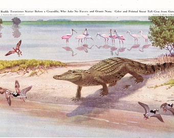 1940s Crocodile and Birds Animal Print -  Vintage Antique Home Decor Book Plate Art Illustration for Framing