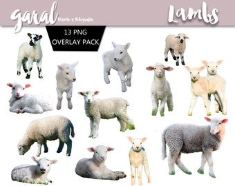 LAMBS Photoshop Overlays, Photoshop overlay, PNG files, Easter, farm, wedding photography, outdoor, garden, spring, die cuts