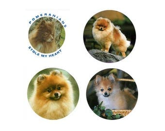 Pomeranian Magnets: 4 Cool Pomeranians for your home, your collection, or to give as a unique gift