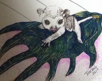 Kinkajou-signed and numbered 8 by 10 print