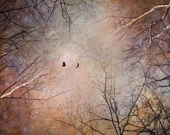 dramatic sky photo, fine art bedroom decor bird flying tree branch photograph, nature pink landscape, surreal dreamy home spiritual surreal