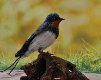 Needle Felted    Bird-Barn Swallow -Lifesize . Ready to ship.
