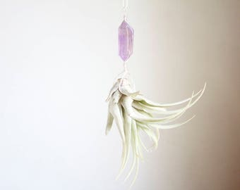 Hanging Air Plant Terrarium, Crystal Airplant Display, Wire Wrapped Amethyst, With Or Without Plant, Pastel Decor, Window Planter