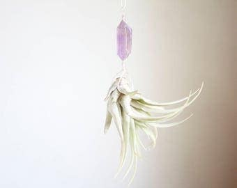 Hanging Air Plant Terrarium, Small Size, Crystal Airplant Display, Little Something, Amethyst, With Or Without Plant,  Window Planter