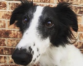 Custom Dog Portrait Plush