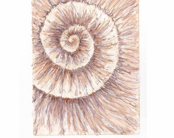 Original ammonite fossil zinc etching no.70 with mixed media jurassic Dorset coast fossil spiral fossil ammonites golden section