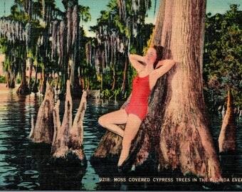Cypress Gardens, Florida, Moss Covered Trees - Vintage Postcard - Postcard - Unused (III)