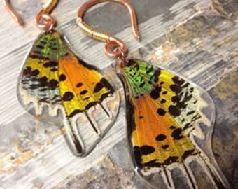 CUSTOM LISTING*** REAL Moth wing earrings - Sunset Moth - Butterfly, Moth, Bug, Insect, Taxidermy Jewelry
