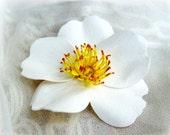 Cherokee Rose White Pin