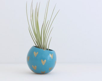 Air Plant Planter with Air Plant - Blue with Gold Hearts.  Valentine's Day / Mother's Day Gift