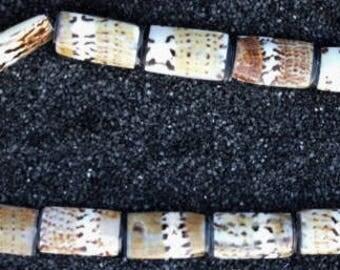 Sea Shell Beads (Captain's Cone)