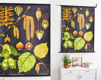 Hazelnut poster, Black poster, Botanical print, school poster, pull down poster, Jung Koch Quentell, roll down poster