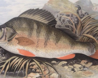 Complete Angler British Fishes Serving Plate