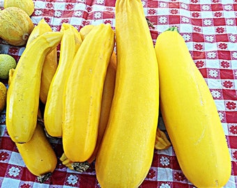 Golden Zucchini Heirloom Summer Squash Seeds Non GMO Early Variety Rare