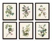 Audubon Bird Prints Set No. 24, Botanical Prints, Illustration, Prints, Vintage Bird Prints, Giclee, Wall Art, Prints, Vintage Bird Prints