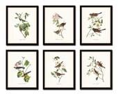 Audubon Bird Prints Set No. 1, Vintage Bird Prints, Giclee, Audubon Prints, Art Print, Wall Art, Bird Print, Natural History Art