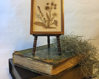 Vintage Hand Pressed Flowers Framed Natural History Victoriana