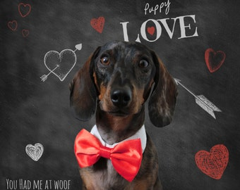 Dog Bow Tie Collar, Dog Wedding Clothes, Dachshund Clothes, Custom, Cat Bow Tie Collar, Photography Prop, Dog Clothes - Choose Your Color