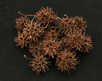 Sweet Gum Balls - For Crafts and Decorations - Box of 100