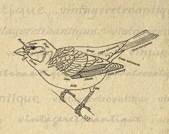Digital Bird Diagram Image Graphic Illustration Printable Download Antique Clip Art Jpg Png Eps Print 300dpi No.880