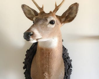 Taxidermy Deer Head Made by Me 8 Point Buck Shoulder Wall Mount with Carved Wood German Black Forest Plaque