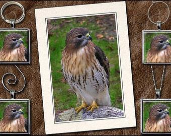 Red-Tailed Hawk Photo Note Card Set - Hawk Pendant, Hawk Keyring, Hawk Ornament, Hawk Wine Charm - Hawk Jewelry (GP165)